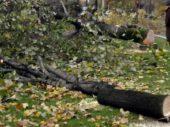 Gezi-Gegner CHP fällt Bäume und bekommt Rückendeckung von der AKP